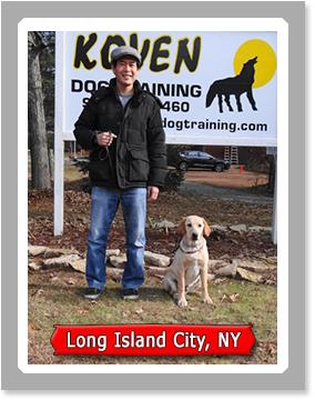 Trained Labrador Retrievers for Sale - Labrador Companion Puppies